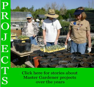 Link to stories about Master Gardener projects